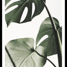Quadros Folhas e Plantas